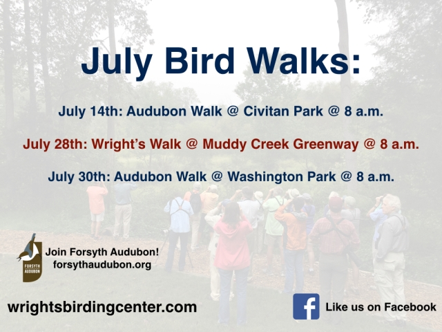 BirdWalks-July.001